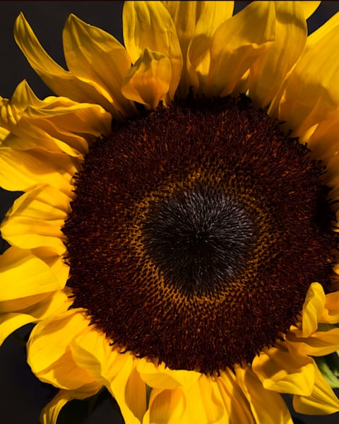 Sunny Side  Art | Thriving Creatively Productions