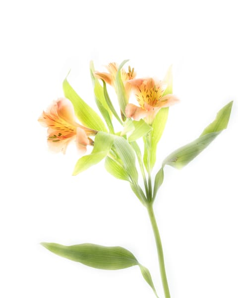 Orange Flowers Art | Thriving Creatively Productions