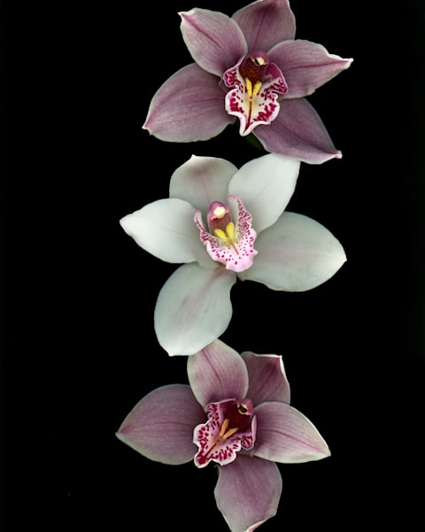 Orchid Oreo Art | Thriving Creatively Productions