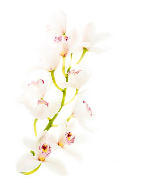 White Orchids  2 Art | Thriving Creatively Productions