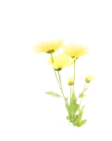Yellow Wildflowers 2 Art | Thriving Creatively Productions