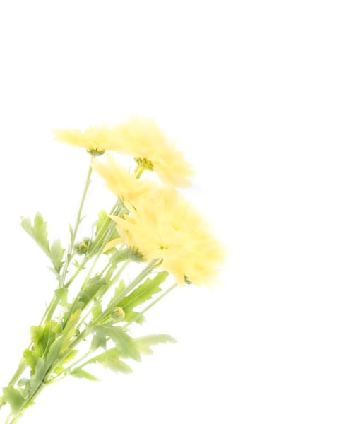 Yellow Wildflowers 1 Art | Thriving Creatively Productions