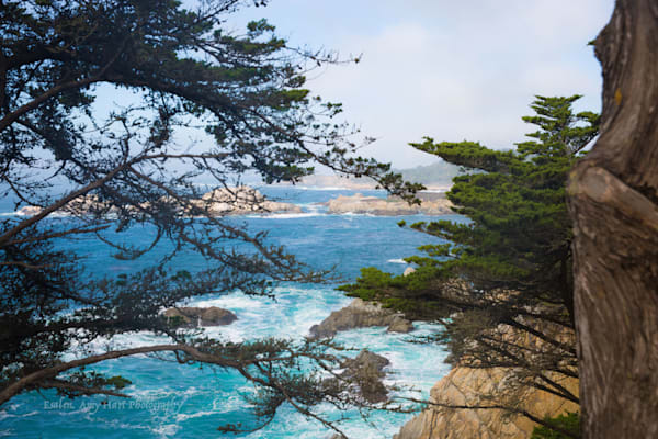 Point Lobos nature reserve, Big Sur Coastline in Northern California by Amy Hart, fine art photography