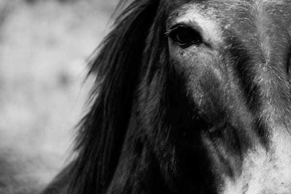 Lonely Donkey Photography Art | Austin Marvel