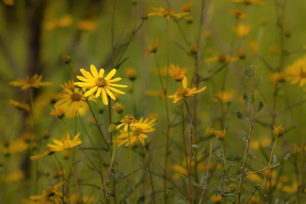 Myakka Blooms Ii Photography Art | Visions By Dan McCarthy
