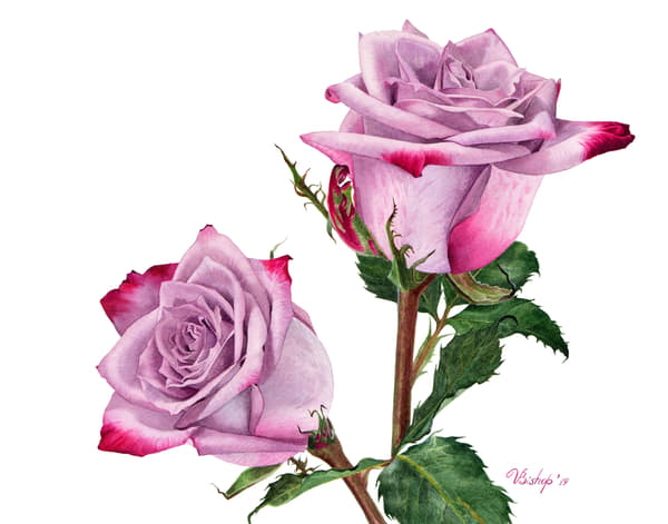 Deep Purple Rose Art | victoriabishop.art