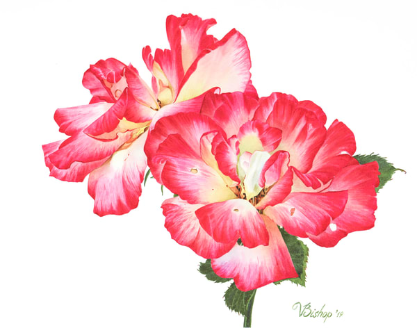 Grandiflora Roses  Art | victoriabishop.art