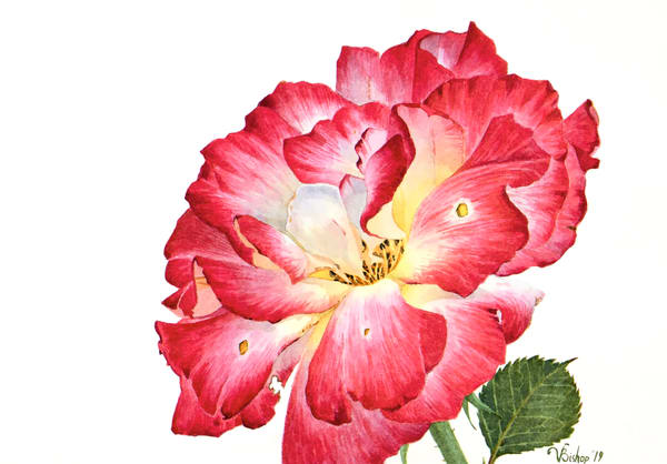Grandiflora Rose Art | victoriabishop.art