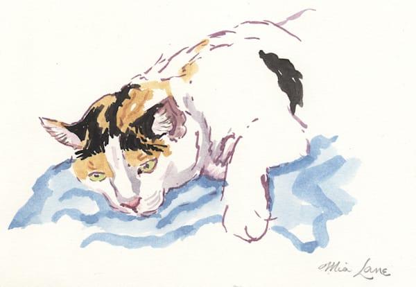 Calico Cat  Original Water Colour Framed Art | Mia Lane