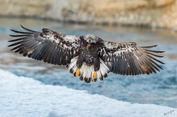 Winter Morning Landing Art | Alaska Wild Bear Photography