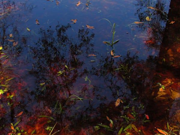 Florida 1 October 9 2020 Art | Lillith