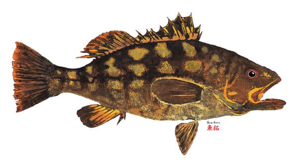 Calico Bass