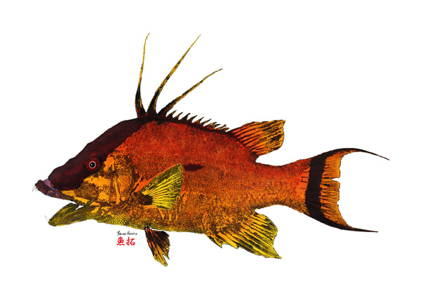 Florida Hogfish
