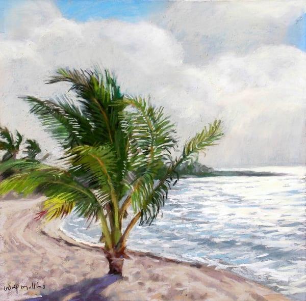 Young Palm Tree, Akumal, Mexico  Art | Waif Mullins Art