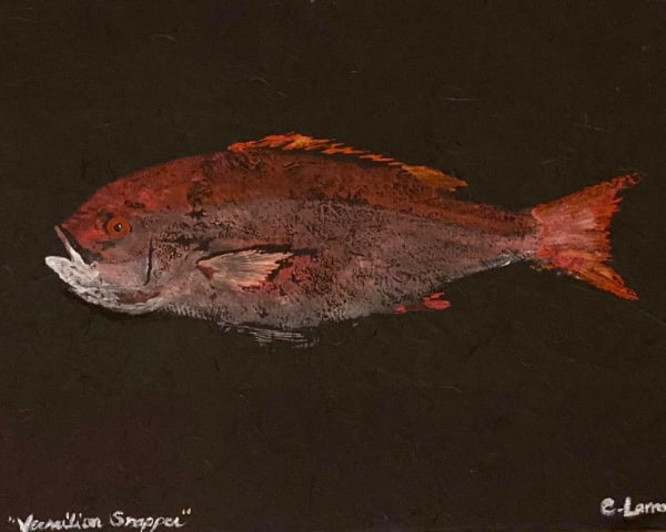 Vermillion Snapper Photography Art | CLAUDIA LARRAIN
