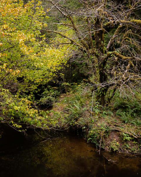 Autumn Forest, Smith Creek, Brooklyn, Washington, 2020