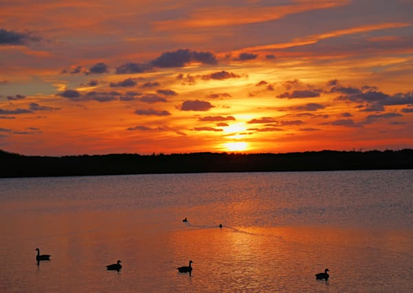 Ducks On The Water|Landscape Photography by Todd Breitling