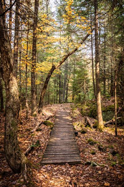 Path Photography Art | Scott Krycia Photography
