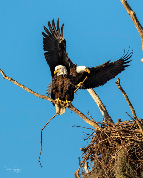 The Eagles and the Nest