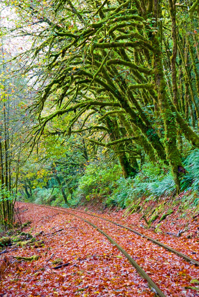 Railroad Tracks And Moss Trees Art | Shaun McGrath Photography