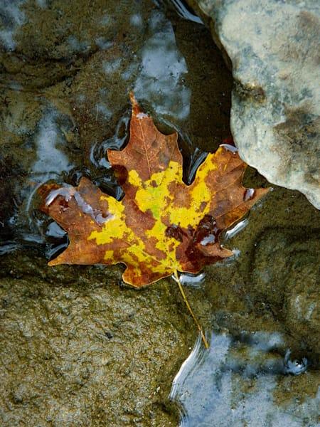 Fallen Leaf Art | Cincy Artwork