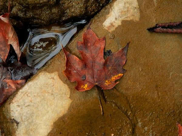 Leaf In The Creek Art | Cincy Artwork