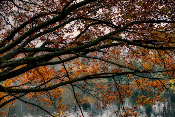 Autumn At The Vale Of Health Art | Martin Geddes Photography