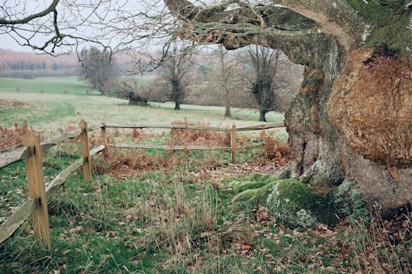 The Second Oldest Oak Art | Martin Geddes Photography