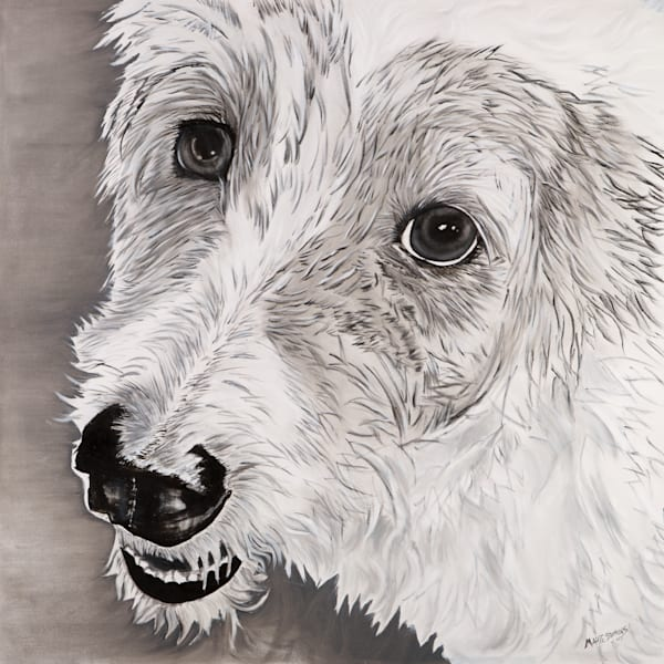 Salt and Pepper Terrier Mix Dog Portrait by American Artist Marie Stephens