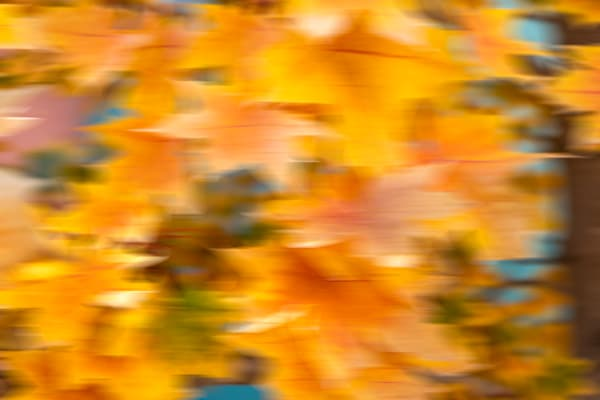 Maple - Fall colored leaves in a digital produced piece of photo art photograph print