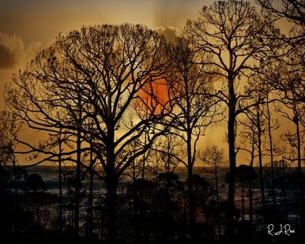 Sunset Trees Art | R.j.Ricci Art