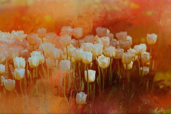 White Tulips Art | R.j.Ricci Art