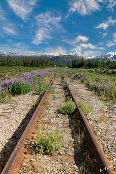 Tracks To Nowhere Art | Alaska Wild Bear Photography