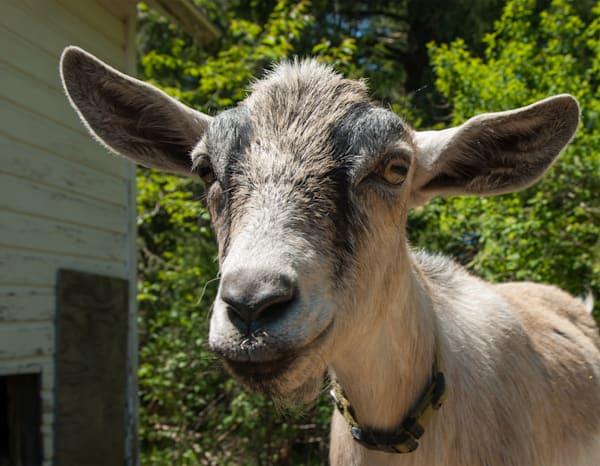 2022 Farm Animal Calendar | Brandon Hirt Photo