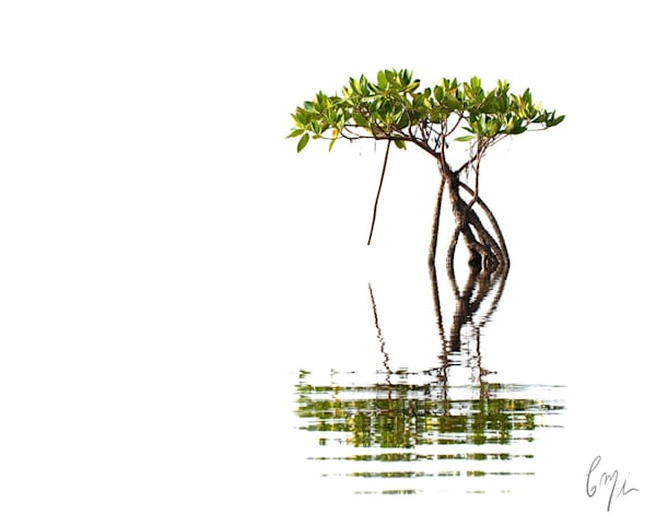 Photography from a canoe - red mangrove on Biscayne Bay
