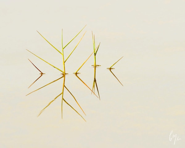 Constance Mier Photography - simple and elegant nature prints