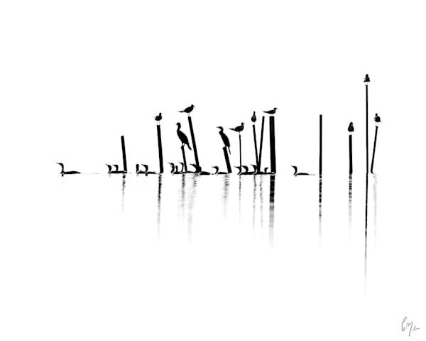Constance Mier Photography's popular Gulls & Cormorants 1 print