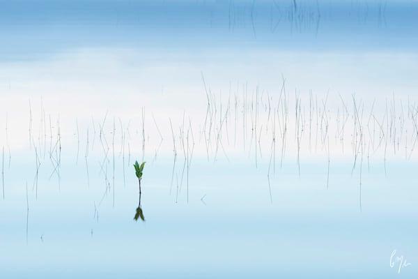 Constance Mier Photography - fine art simplistic scenes in nature
