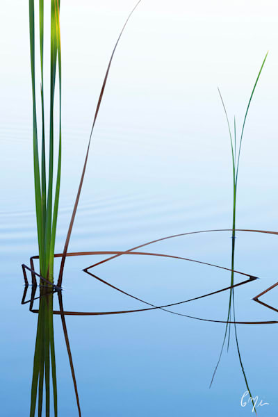 Constance Mier Photography - capturing nature's exquisite designs from a canoe
