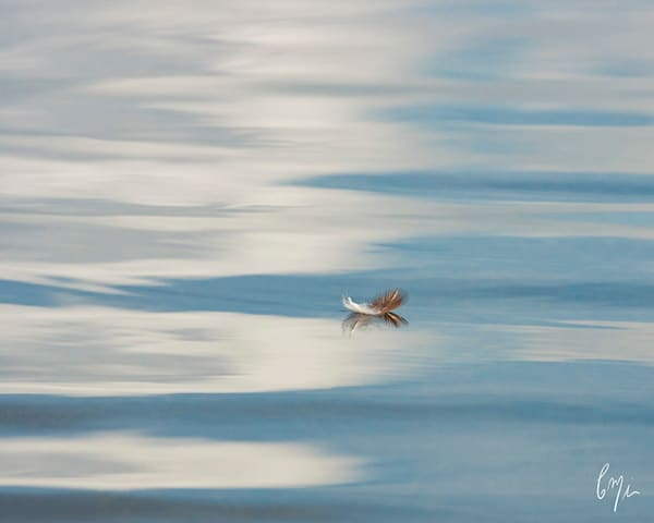 Constance mier photography - capturing nature scenes on Florida waters