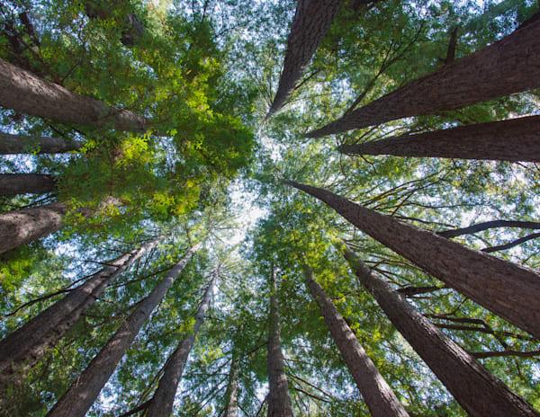 Santa Cruz Redwoods