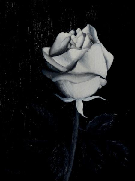 Rose In Shades Of Gray Art | Liliedahl Art