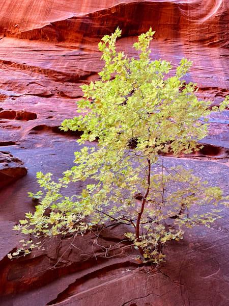Burr Trail Slot Canyon 1 Art | photographicsart