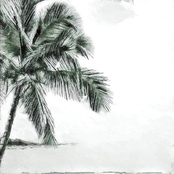 Bareparadise
