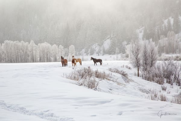 Five horses posing in the snow in the Colorado rockies