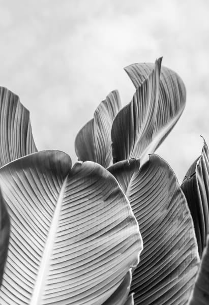 Palm Two:  Second of a series by fine art photographer Shane O'Donnell