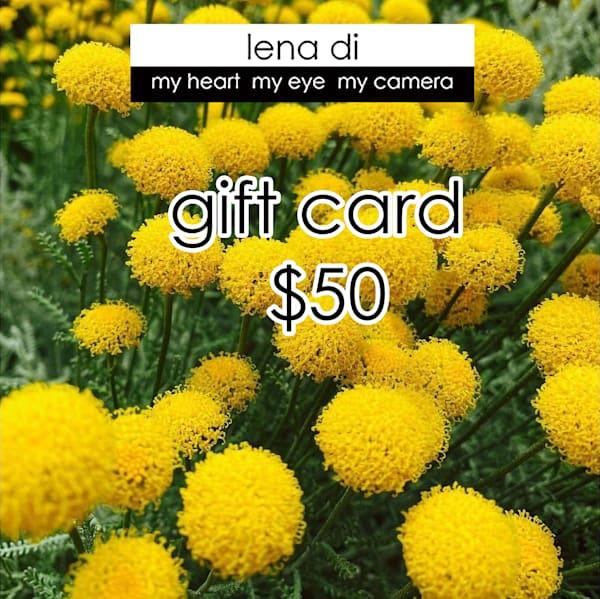 $50 G Ift Card | LenaDi Photography LLC
