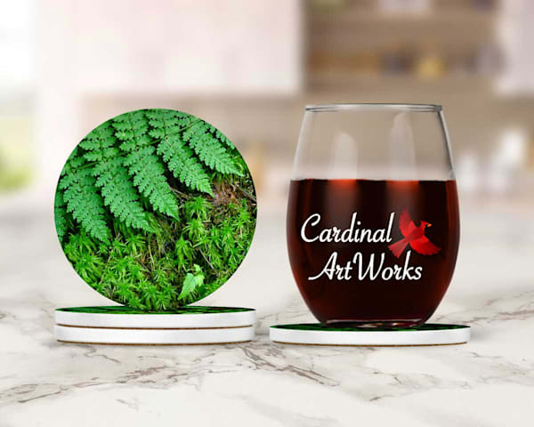 Ferns and Moss Coasters