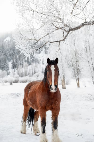 Horse, Colorado, snow, winter, morning