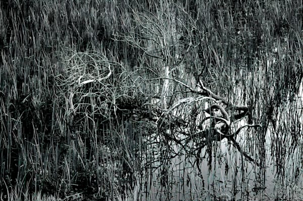 Tuolomne Branches Photography Art | Ed Sancious - Stillness In Change